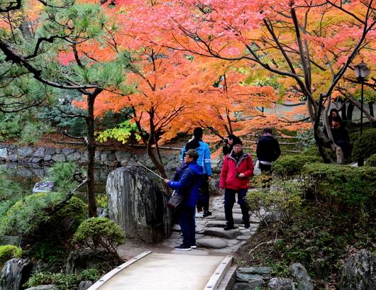 1-17.11.28 和歌山城公園の紅葉-7.jpg
