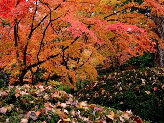 1-17.11.28 和歌山城公園の紅葉-9.jpg