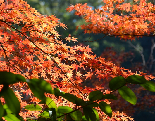1-17.11.30 和歌山城公園の紅葉-2.jpg