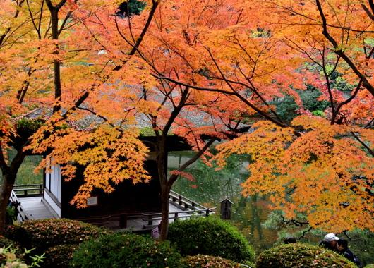1-17.11.30 和歌山城公園の紅葉-5.jpg