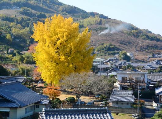 1-17.12.03 三谷の銀杏-6.jpg