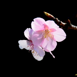 1-18.01.22 桜-1.jpg