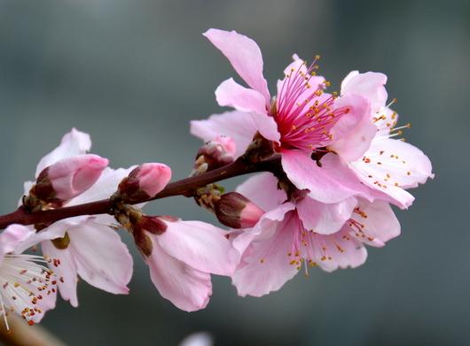 1-18.03.02 桃の花-2.jpg