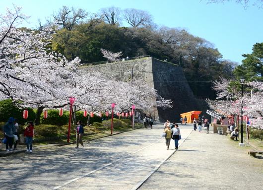 1-18.03.29 和歌山(城)公園の桜-2.jpg