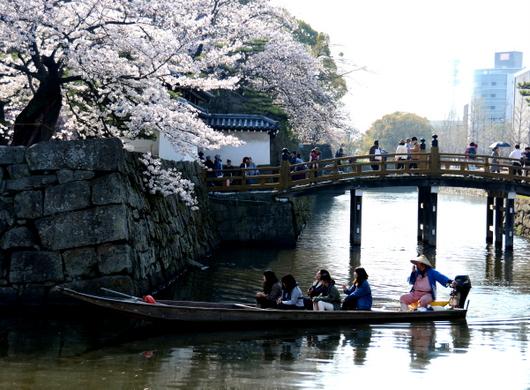 1-18.03.29 和歌山(城)公園の桜-8.jpg