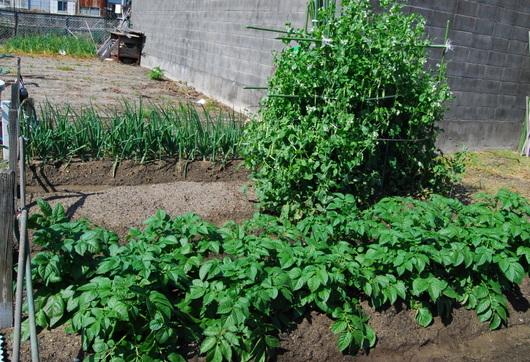1-18.04.25 菜園-6.jpg