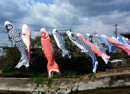 1-18.05.04 紀の川市の鯉のぼり.jpg