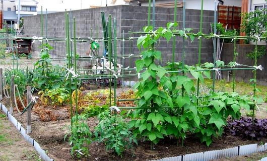 1-18.05.31 菜園-1.jpg