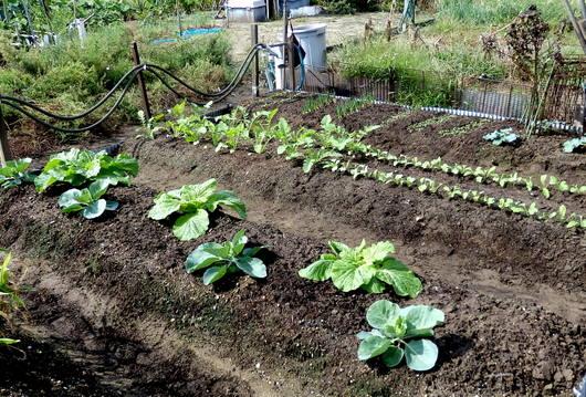 1-18.09.23 菜園-1.jpg