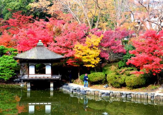 1-18.12.05 和歌山(城)公園の紅葉-1.jpg