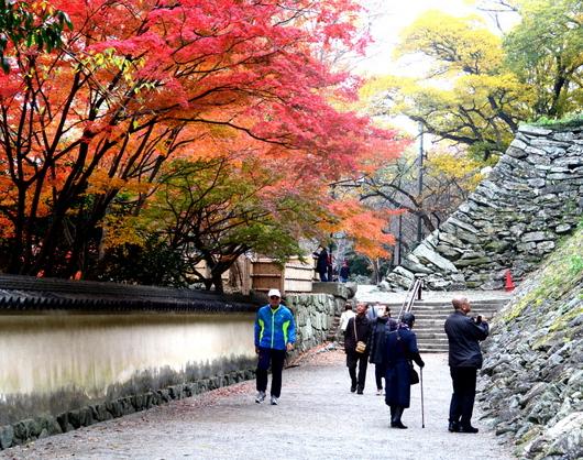 1-18.12.05 和歌山(城)公園の紅葉-10.jpg