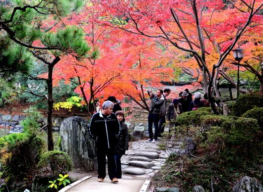 1-18.12.05 和歌山(城)公園の紅葉-2.jpg