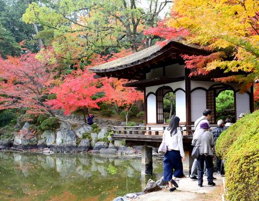 1-18.12.05 和歌山(城)公園の紅葉-3.jpg