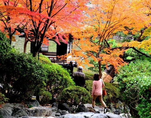 1-18.12.05 和歌山(城)公園の紅葉-4.jpg