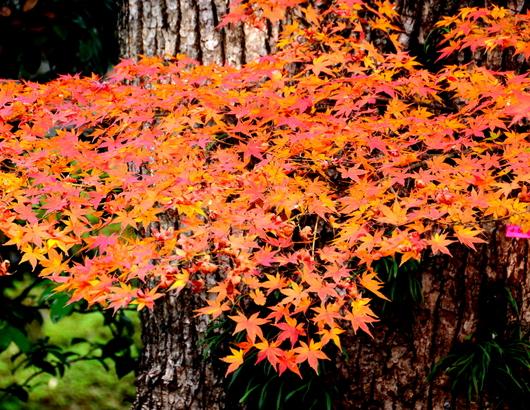 1-18.12.05 和歌山(城)公園の紅葉-5.jpg