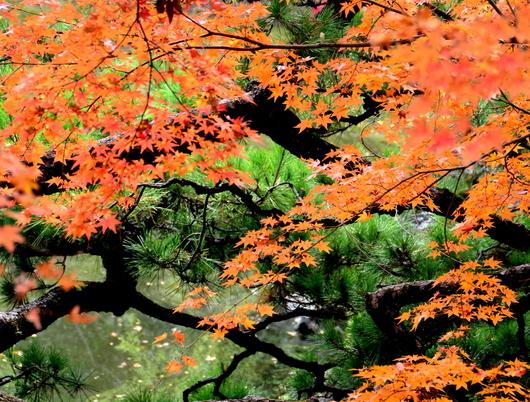 1-18.12.05 和歌山(城)公園の紅葉-7.jpg