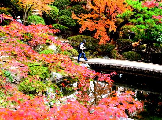 1-18.12.05 和歌山(城)公園の紅葉-8.jpg