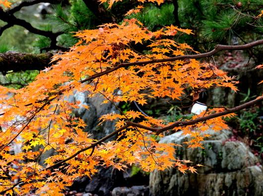 1-18.12.05 和歌山(城)公園の紅葉-9.jpg