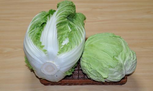 s-09.12. 10白菜.キャベツ.jpg